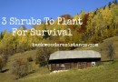 3 Shrubs To Plant For Survival