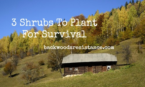 3-shrubs-to-plant-for-survival