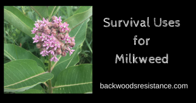 Survival Uses for Milkweed
