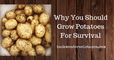 Why You Should Plant Potatoes For Survival