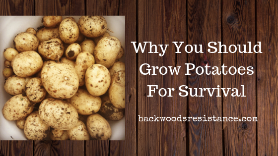 Why You Should Grow Potatoes For Survival